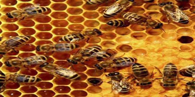 Προστασία των μελισσών από ψεκασμούς