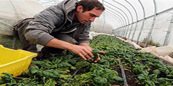 Τζίρο 50.000 ευρώ και άνω θέλουν θερμοκήπια και στάβλοι στα Σχέδια