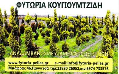 Φυτώρια Κουγιουμτζίδη, Γιαννιτσά