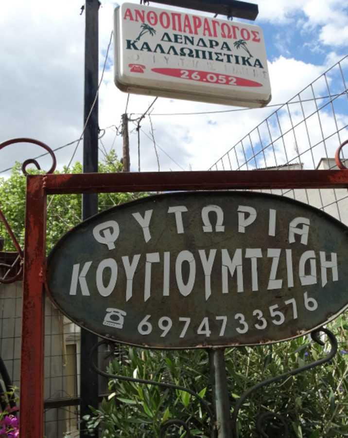 koygioumtzidifyta2