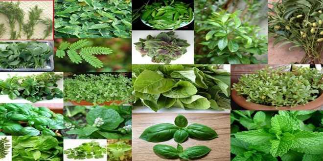 Αποτέλεσμα εικόνας για βότανα και θεραπείες