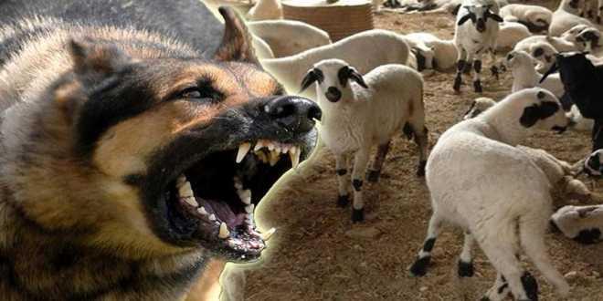Αποκλειστικό! Άγριος ξυλοδαρμός σε υπάλληλο του δήμου Πέλλας! Σύλληψη κτηνοτρόφου στα Άθυρα